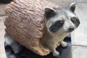 Cute Raccoon in a log